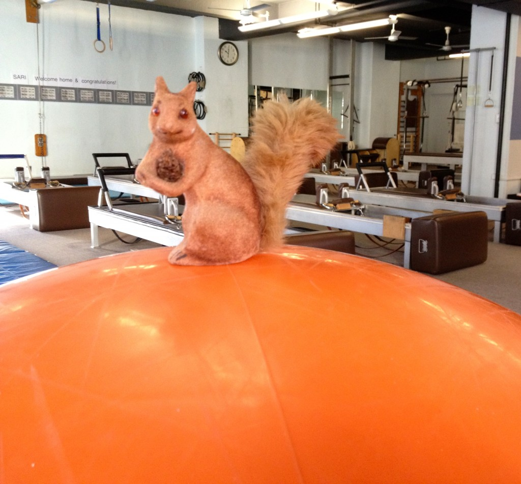 Adele considers Pilates training from atop Drago's ball.
